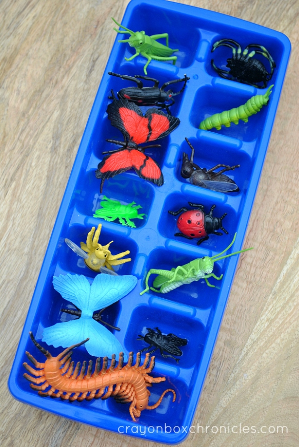 Insects inside ice cube tray for painting