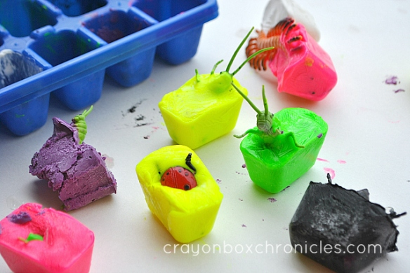 insects inside frozen paint cubes